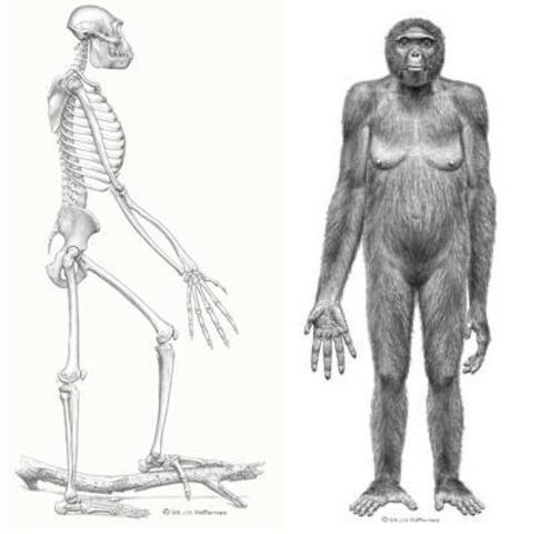 5:18PM Oldest Human-like Ancestors