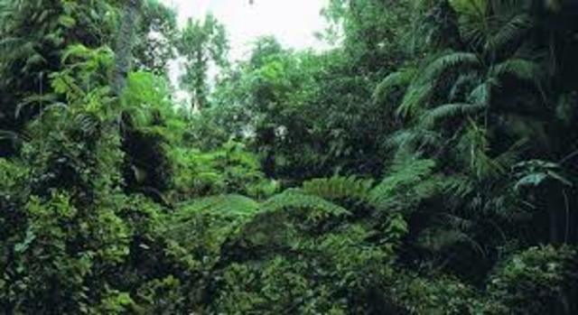 rainforest research paper Research essay sample on amazon rainforest custom essay writing.