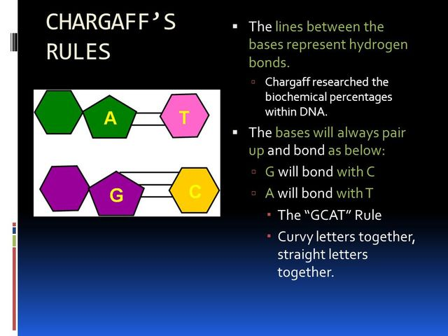a biography of erwin chargaff a pioneer in biochemistry