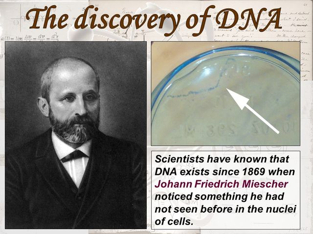 """history and discovery of dna essay Discovery of the structure of dna essay 2374 words 