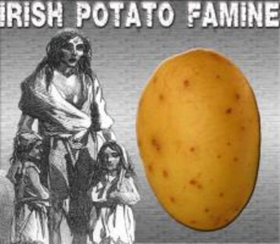 Worst Year of Irish Potato Famine