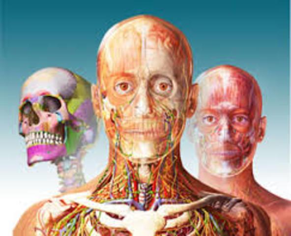 Linea del tiempo Anatomía Humana timeline | Timetoast timelines