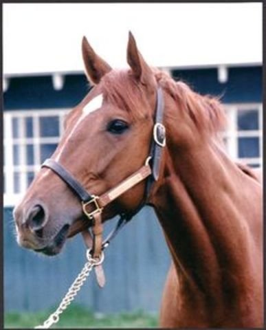 Secretariat Wins Triple Crown pt.3