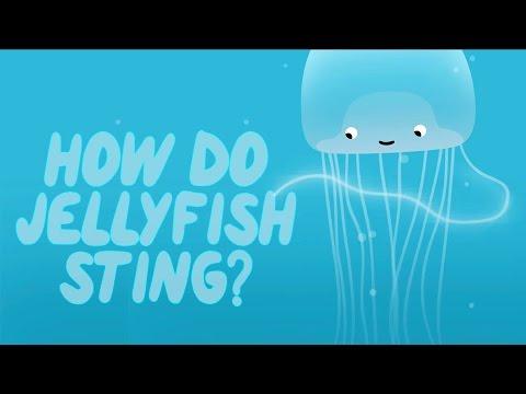 How does a jellyfish sting? - Neosha S Kashef thumbnail
