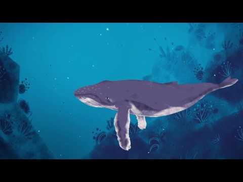 Why do whales sing? - Stephanie Sardelis thumbnail