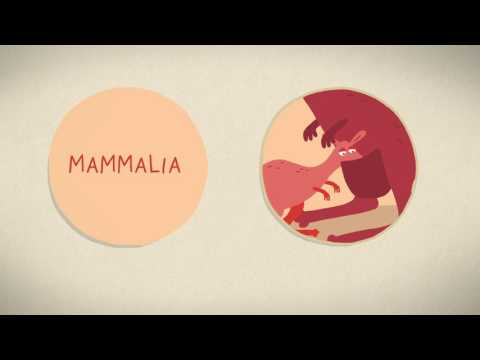 The three different ways mammals give birth - Kate Slabosky thumbnail