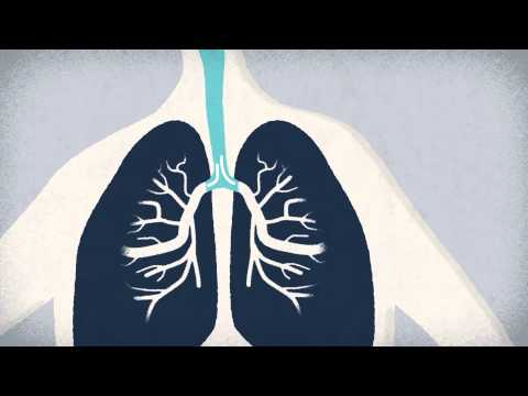 What do the lungs do? - Emma Bryce thumbnail