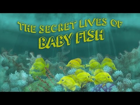 The secret lives of baby fish - Amy McDermott thumbnail