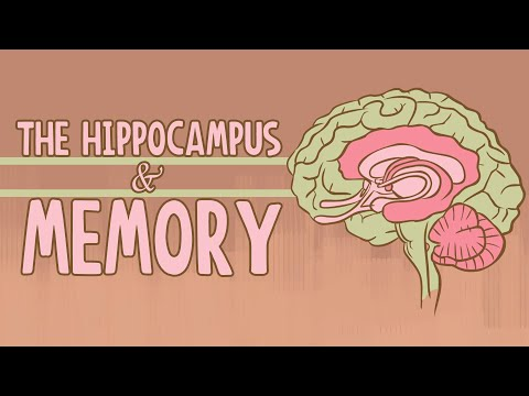 What happens when you remove the hippocampus? - Sam Kean thumbnail
