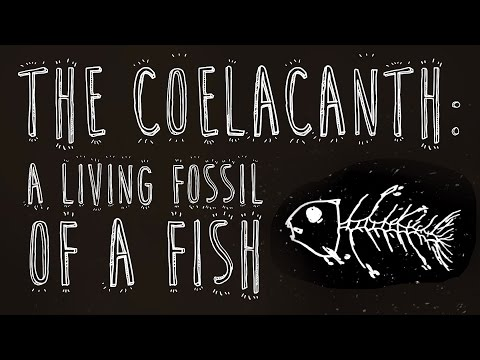 The coelacanth: A living fossil of a fish - Erin Eastwood thumbnail