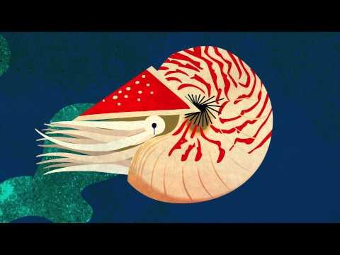 The evolution of the human eye - Joshua Harvey thumbnail