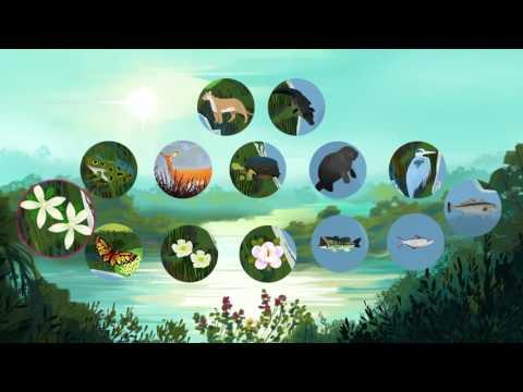 The threat of invasive species - Jennifer Klos thumbnail