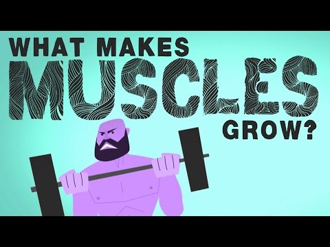 What makes muscles grow? - Jeffrey Siegel thumbnail