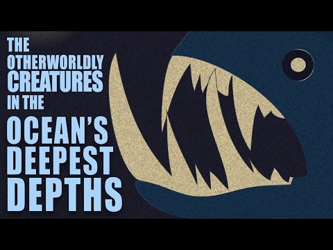 The otherworldly creatures in the ocean's deepest depths - Lidia Lins thumbnail