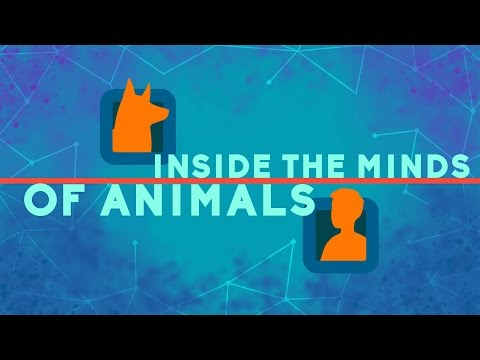 Inside the minds of animals - Bryan B Rasmussen thumbnail