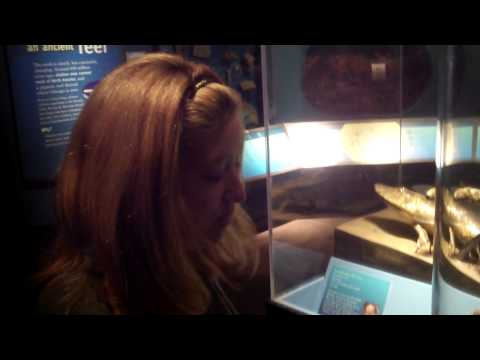 "2014-11-23 Megan Fox audits the Field Museum's ""Evolving Earth"" exhibit thumbnail"