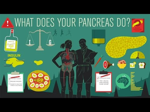 What does the pancreas do? - Emma Bryce thumbnail