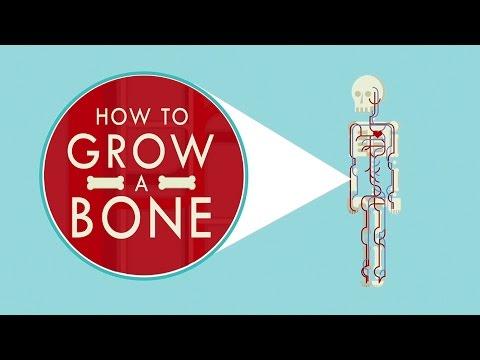 How to grow a bone - Nina Tandon thumbnail