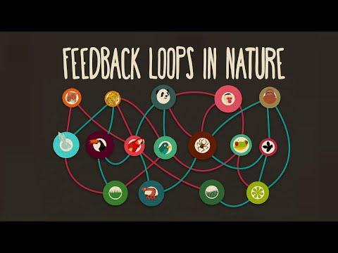 Feedback loops: How nature gets its rhythms - Anje-Margriet Neutel thumbnail