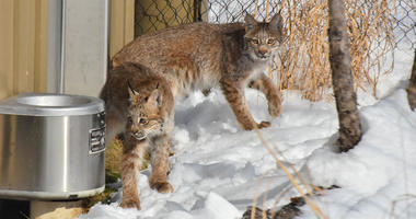 A new dazzling duo at the Buffalo Zoo