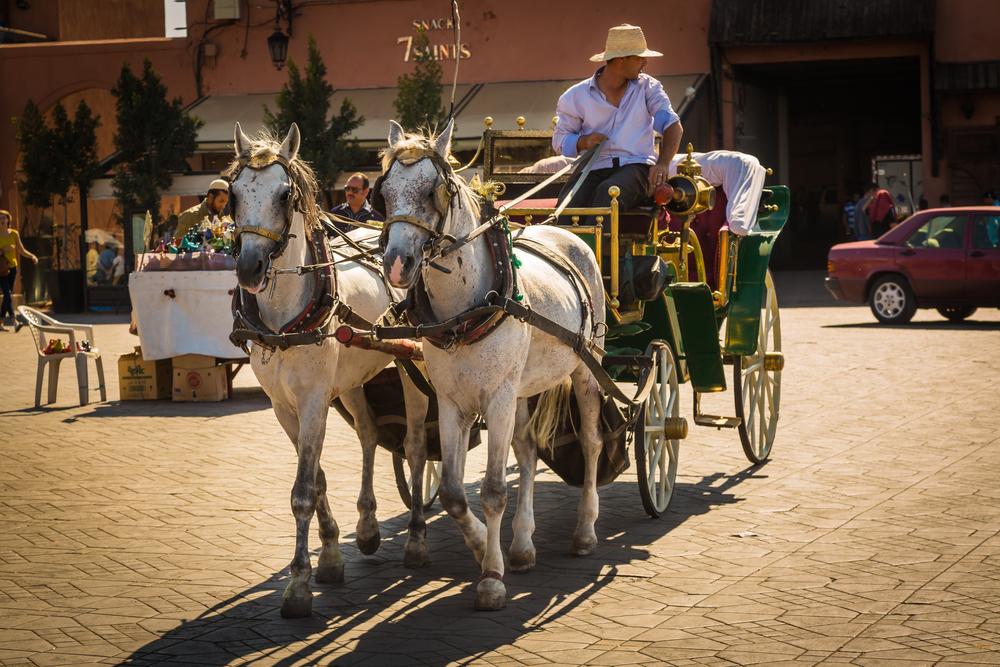 Jemaa el Fna square in Marrakesh_349117628