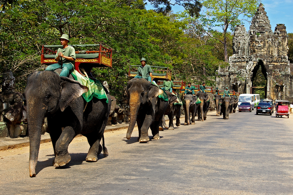 Elephant rides for tourists at Cambodia_29492053