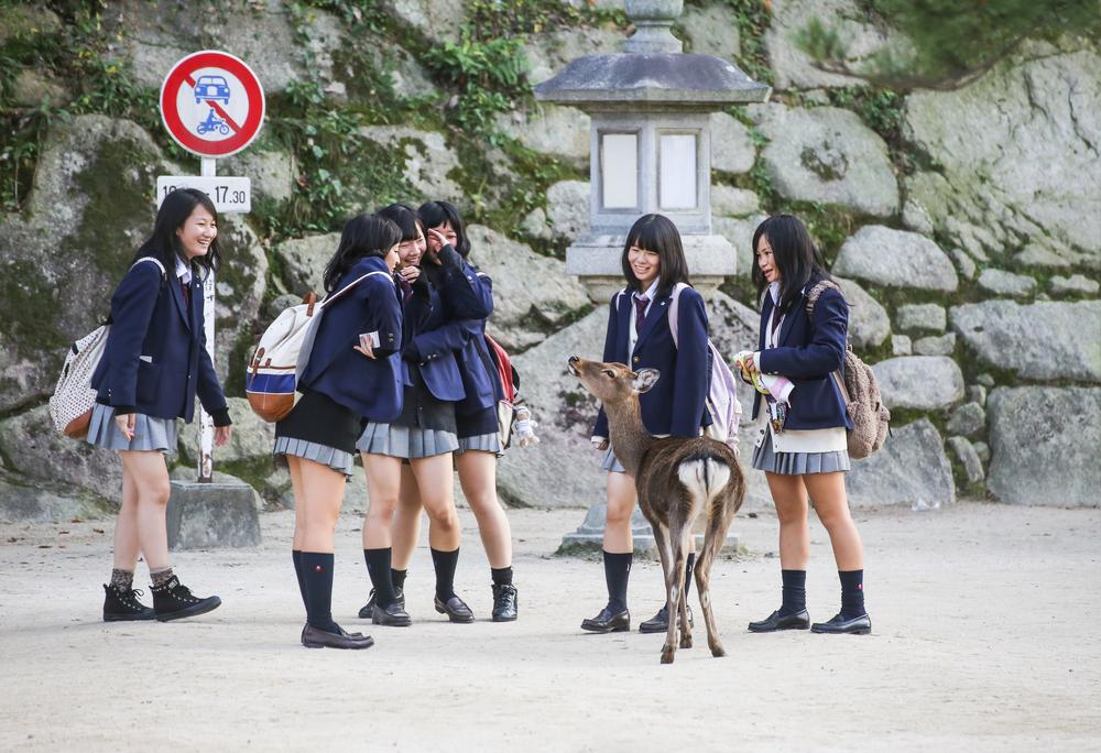 Miyajima Deer_367312481