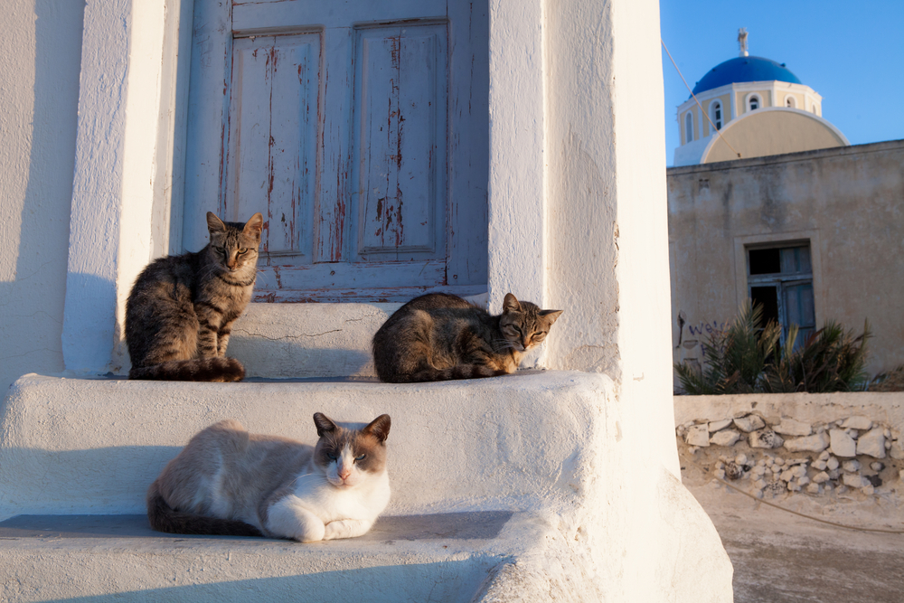 Street cats in Athens, Greece_154160909