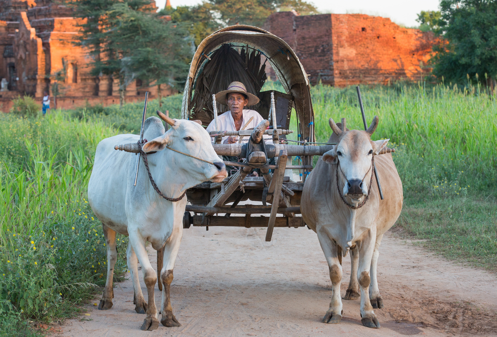 cart with temples behind, Bagan_407131318