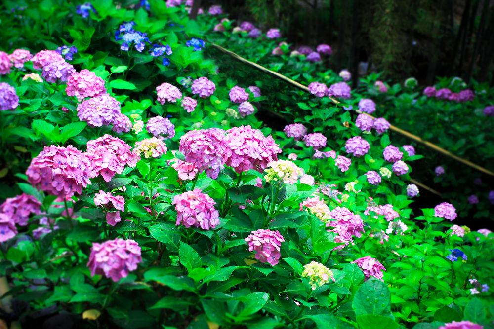 Kamakura, Japan_264559313