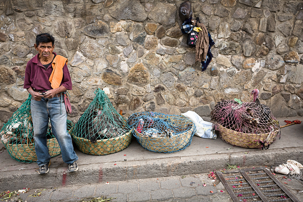 poultry seller in the street_360478490