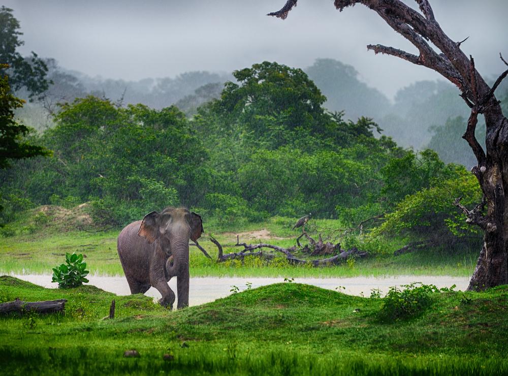 Elephant in the wild_126694037