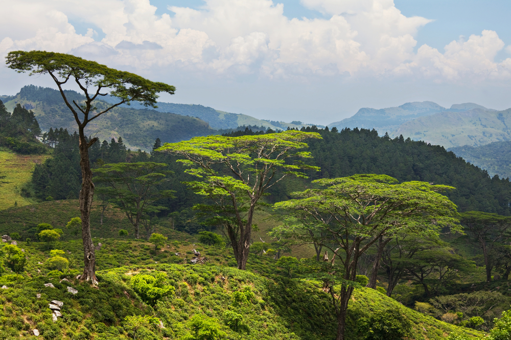 Sri Lanka landscapes_100903963