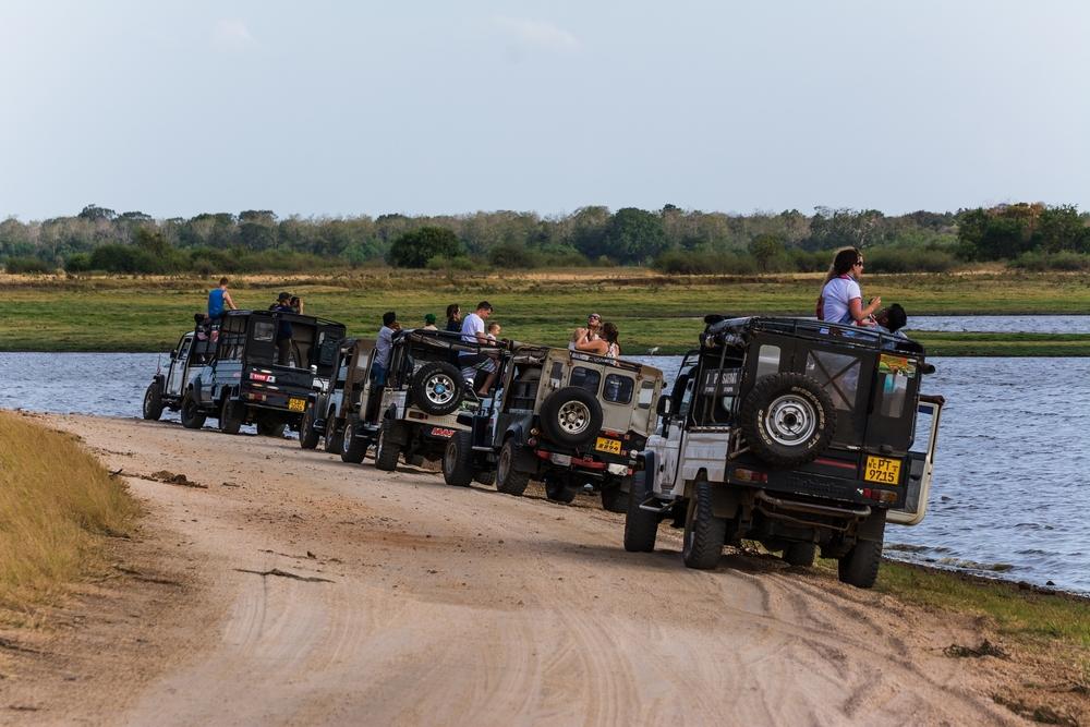 safari in sri lanka_288851330