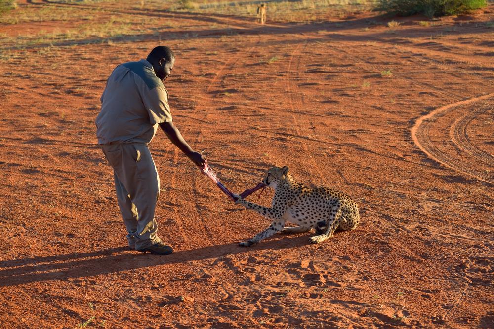 Bagatelle Kalahari Game Ranch_396467965