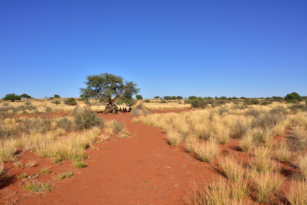 beautiful Kalahari desert landscape with bushmen village_384849067