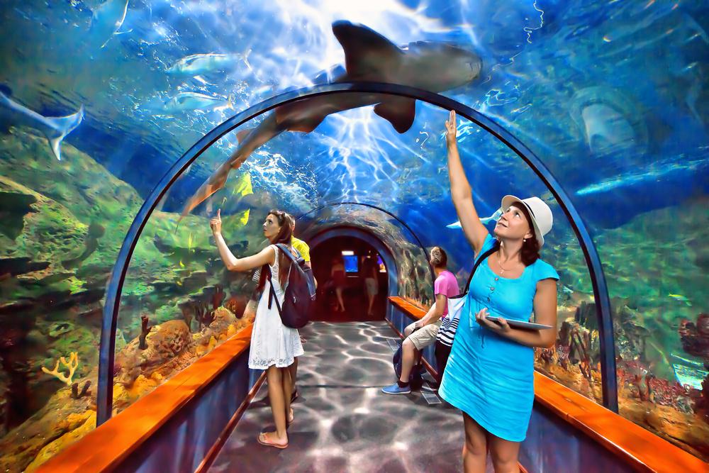 Aquatic tunnel in the Loro parque aquarium _211234159