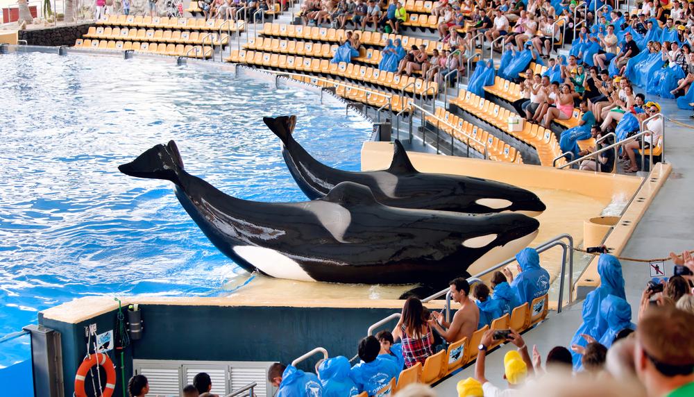New Orca Ocean exhibit_225975211