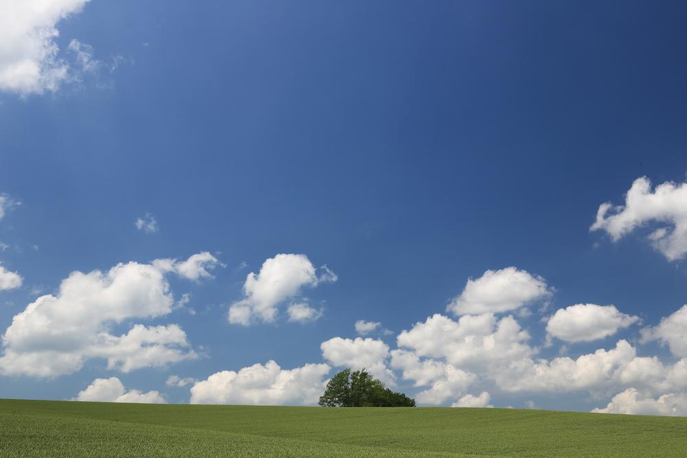 hill of biei _389687611