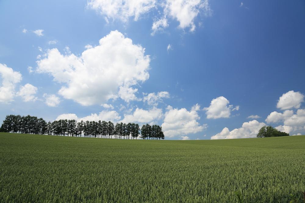 hill of biei japan_389687656