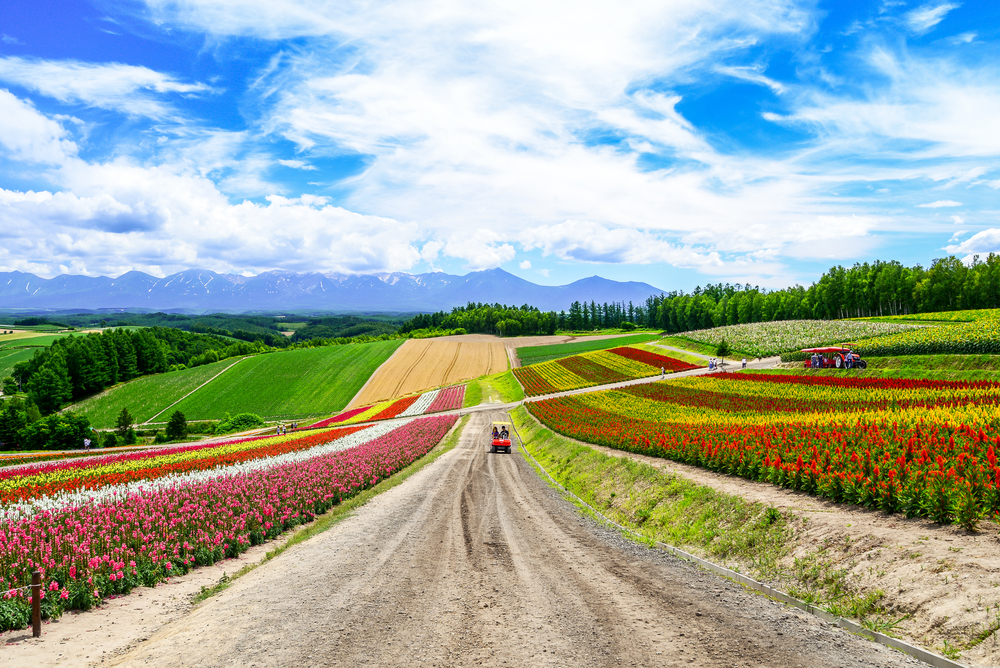 summer of Hokkaido_456781279