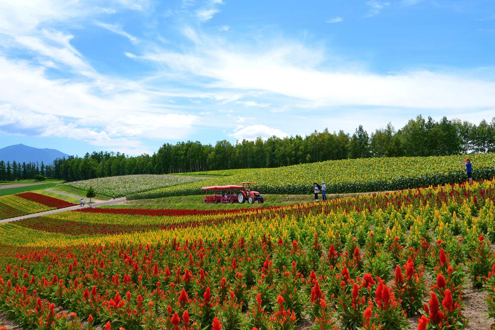 summer of Hokkaido_152098484