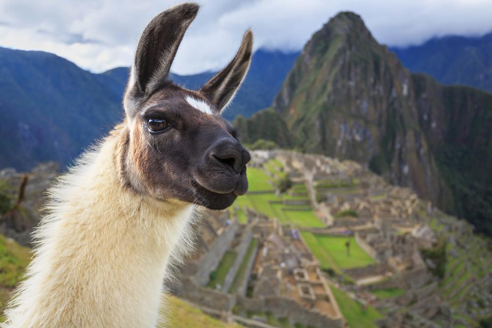 Machu Picchu_228804430