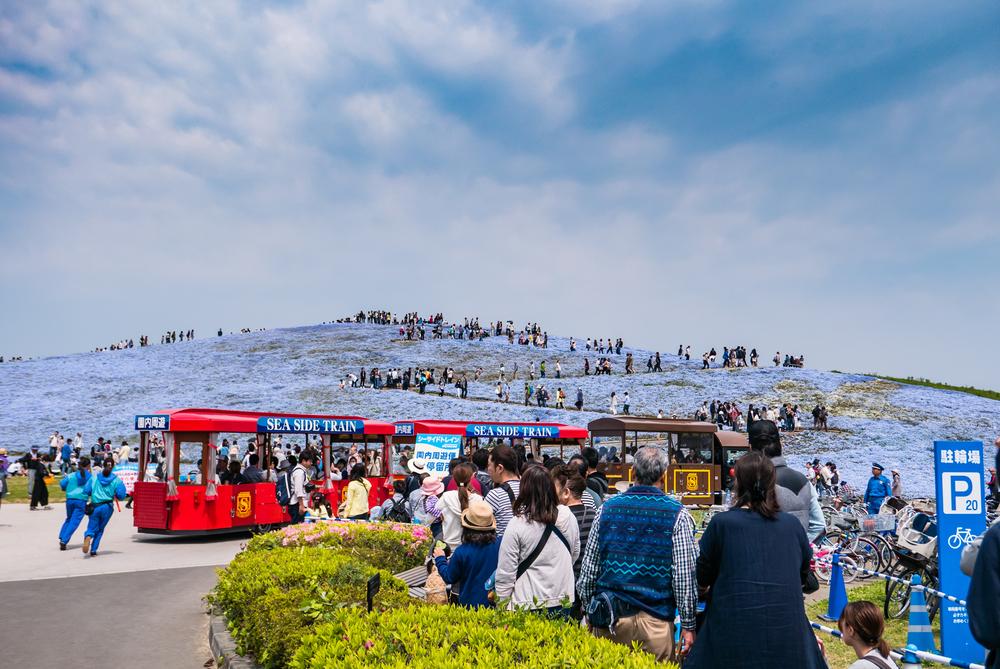 Tourists at Hitachi Seaside Park_472960171