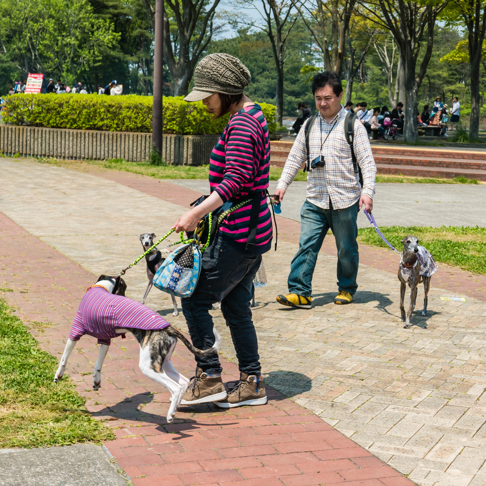 Tourists at Hitachi Seaside Park_472947754