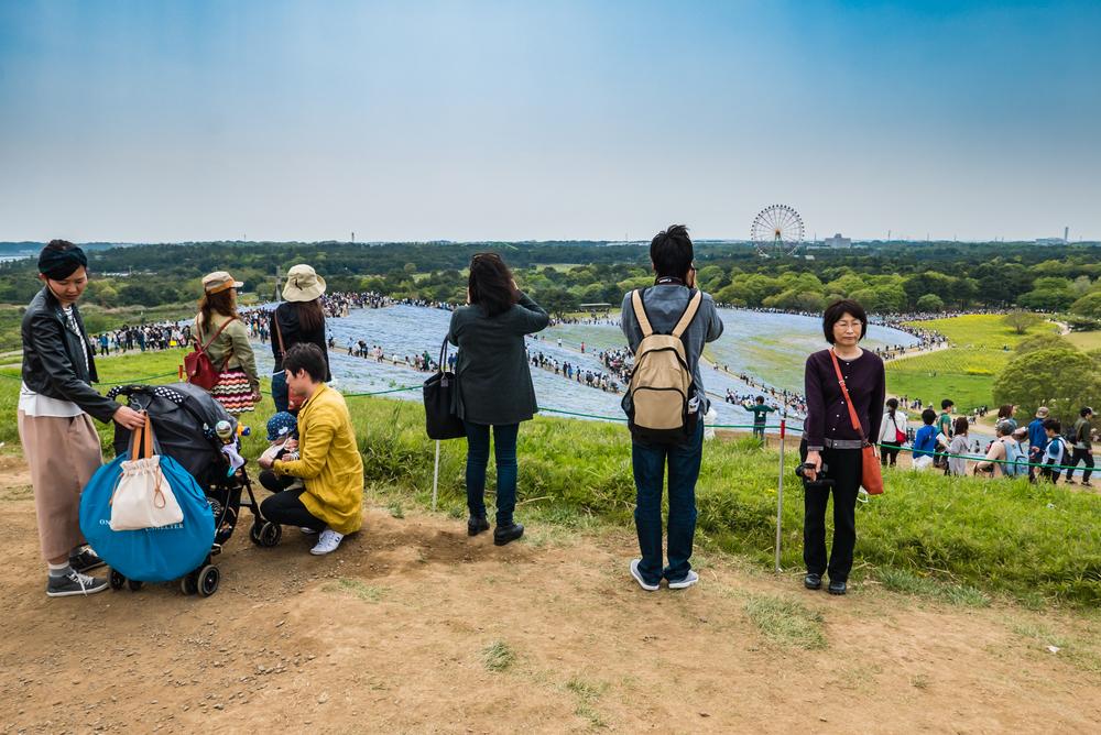 Tourists at Hitachi Seaside Park_472947682