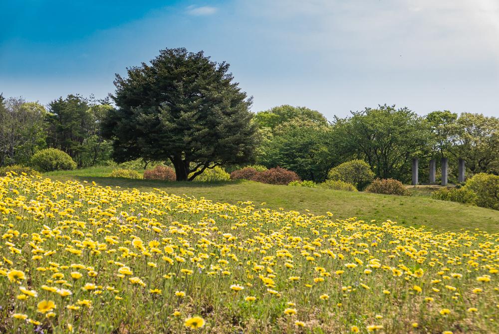 Garden in Hitachi Seaside Park _472968601