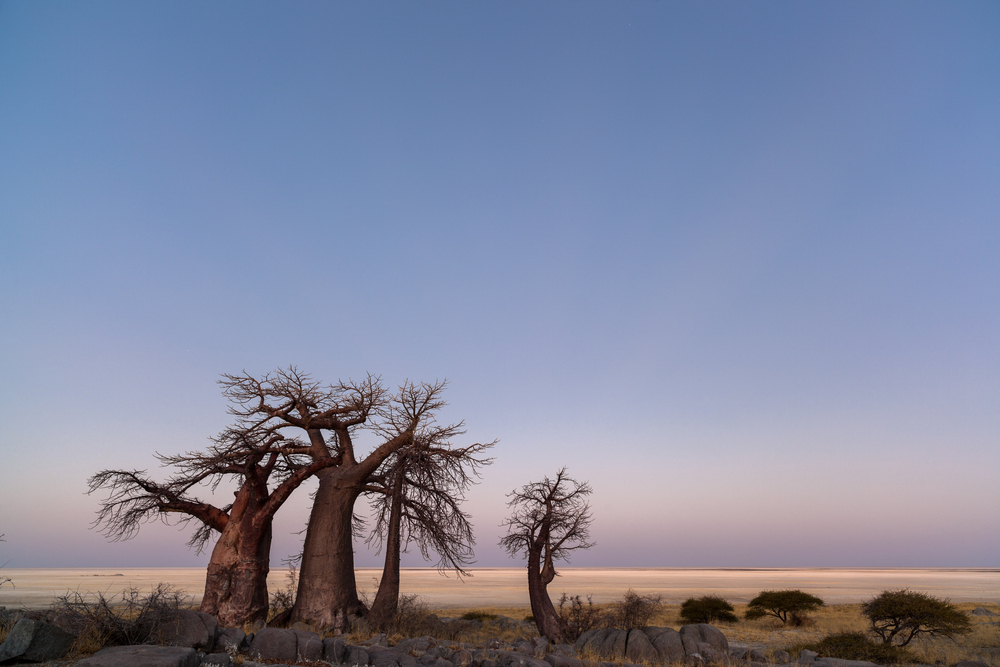 baobabs-at-twilight_368209115