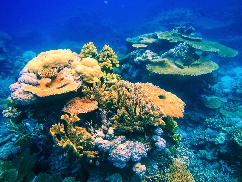 taveuni-island-fiji_525872290