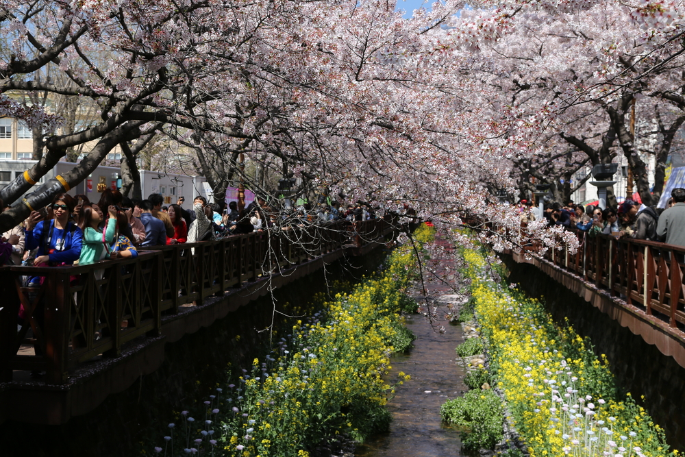 yeojwacheon-romance-bridge-in-busan_524162011